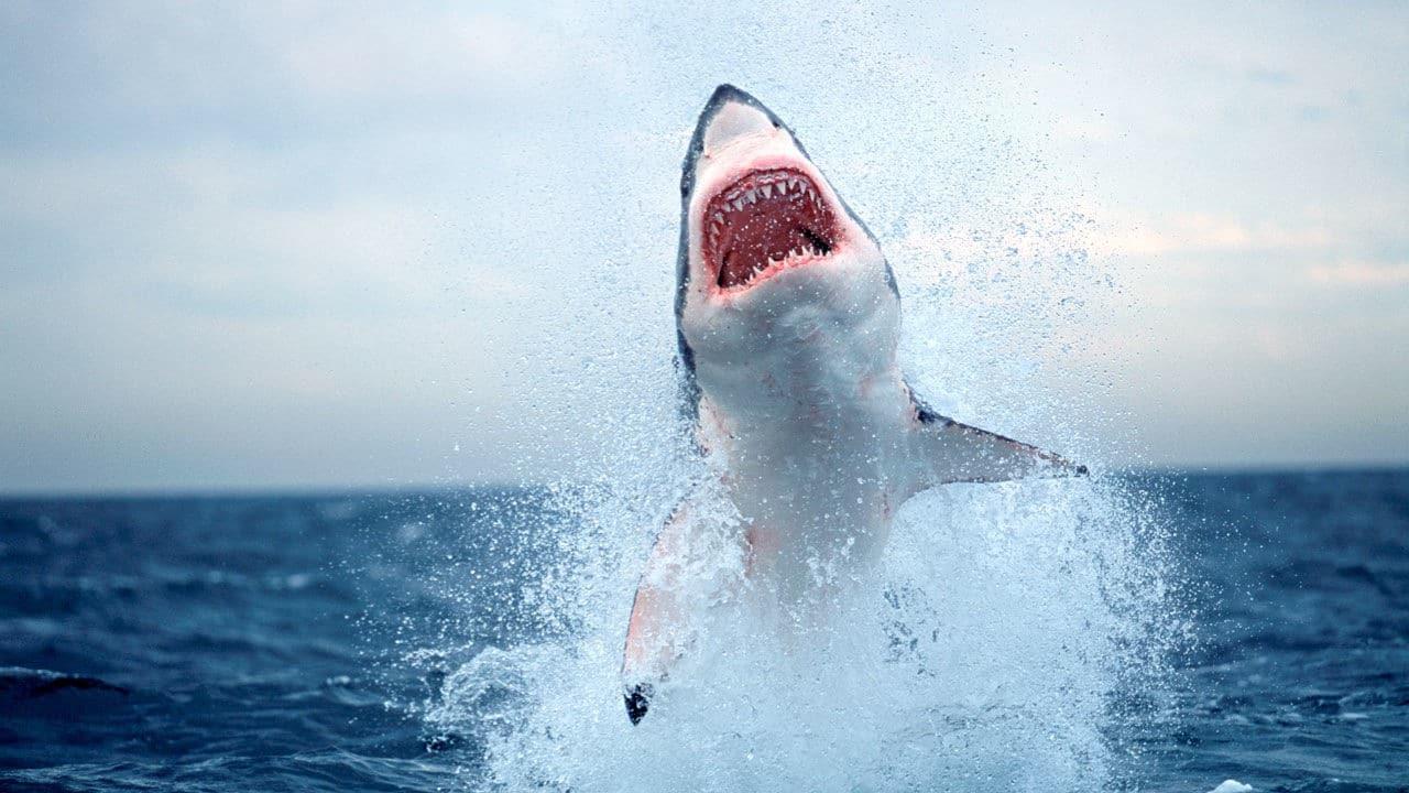 Quel est le requin le plus dangereux?